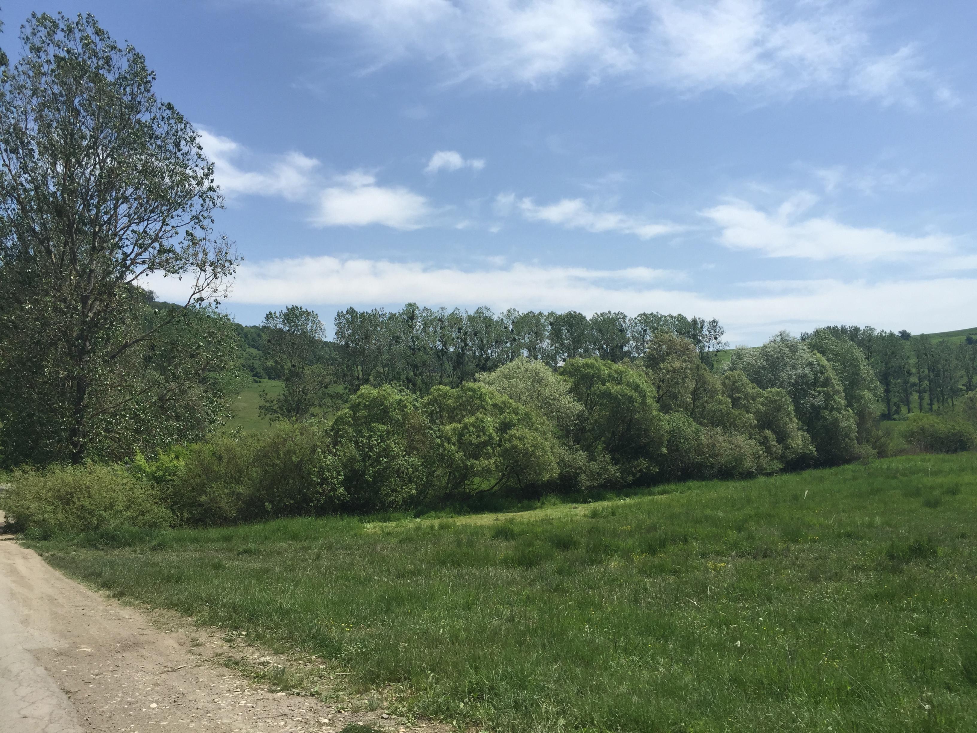landscape hedge